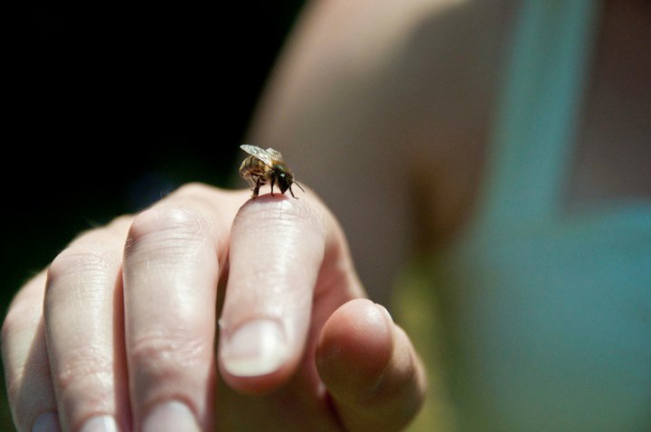 31. Bee